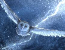 Beautiful white owl enter in water - HD wallpaper
