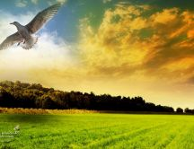 White bird flying in the nature - HD wallpaper