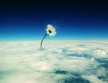 Abstract flower over the clouds - HD wallpaper