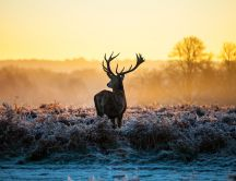 Beautiful deer in the morning light