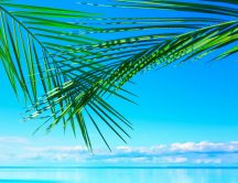 Green palm leaves over the blue water - HD summer wallpaper