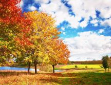 Autumn trees - beautiful nature landscape