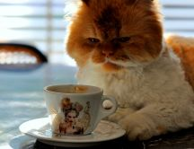 Funny cat drink coffee in the morning