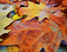 Autumn carpet - cooper colored leaves