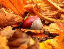 Macro autumn fruits - chestnuts