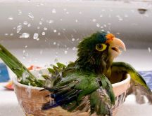 Playful parrot bathing in a bowl of water