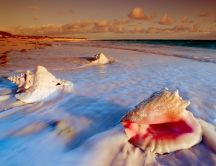 Sea ​​scallops soaked with water foam - HD wallpaper