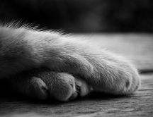Sleepy cat paws - good morning everyone