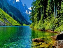 Green water on a wonderful green nature - HD wallpaper