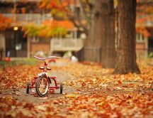 Childhood bicycle in the park - autumn carpet