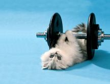 Fluffy cat at the gym - funny HD wallpaper