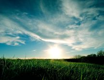 Green grass shining in the sun light - HD nature wallpaper