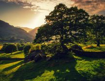Shadows on the green field - nature HD wallpaper