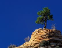 Beautiful tree on the top of a rock - blue sky on background