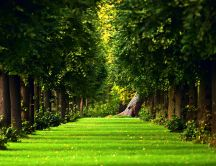 Beautiful green path in the forest - HD nature wallpaper