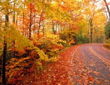 Road full of cooper-colored leaves - autumn symbol