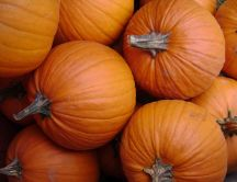 Big orange pumpkins - delicious fruit of autumn