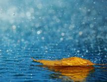 Cooper colored leaf in the rain - beautiful autumn wallpaper