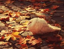 A white dove freezing - cold autumn season
