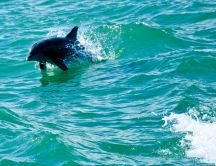 Beautiful animal - the dolphin jump in the water