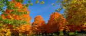 Autumn tree and summer green grass - two seasons