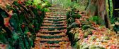 Steps full of cooper colored leaves - autumn season