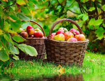 Autumn harvest - baskets full of apples