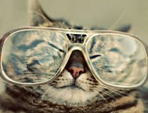 Cat wear grandmother's glasses - funny HD wallpaper