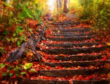 Stairs in the woods full of copper-colored leaves