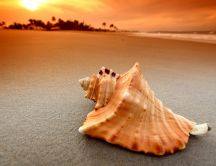 Beautiful big shell on the sand of a beach