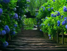 Path to the flower garden - HD wallpaper