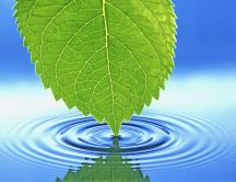 Water waves with a green leaf - HD wallpaper