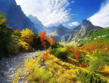 Beautiful mountain river -HD nature landscape