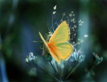 Beautiful orange butterfly and flowers - HD wallpaper