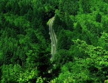 Green nature - beautiful road through forest