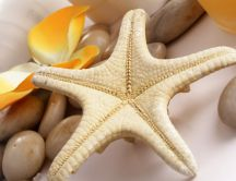 Beautiful starfish, stones and flowers - HD wallpaper