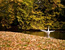 Beautiful autumn season - a goose on the water
