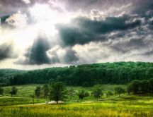 Beautiful sunlight over the green nature - HD wallpaper