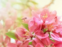 Beautiful pink flowers - symbol of the spring