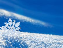 Beautiful snowflake in the sunlight - macro HD wallpaper