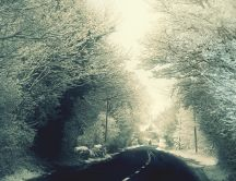 Road through the white forest - HD winter wallpaper