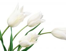 Beautiful white flowers - symbol of spring