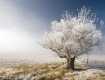 Old white tree - Hd winter wallpaper