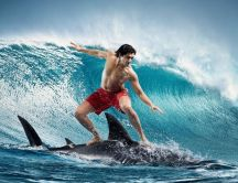 Extreme sports - surfing on a shark