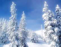 Beautiful white forest - HD winter wallpaper