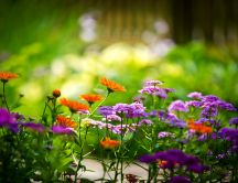 Little spring flowers on the garden - HD wallpaper