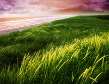 Green grass near the seaside - HD nature wallpaper
