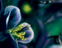 Macro blue flower - beautiful nature