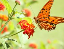 Beautiful orange butterfly - spring HD wallpaper