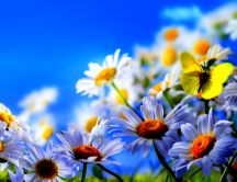 Little yellow butterfly in a garden with daisies